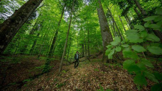 generous, wwf, développement, durable, écosystème, foret, forêt